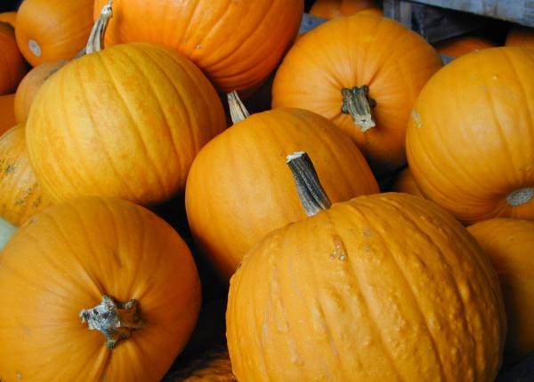 Halloween-Kürbisse: Sehr gut geeignet für Suppen, Kuchen, Marmeladen etc.