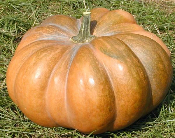 Muscade de Provence (Muskatkürbis): Eignet sich für jede Zubereitung; für Suppen (auch ausgehölt als